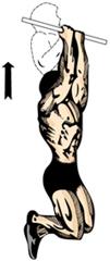 tractiuni biceps