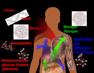 Glicogen