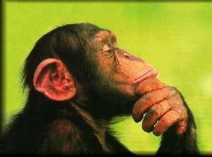 cimpanzeu gandind