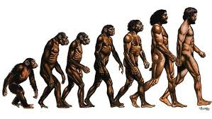 evolutia-umana